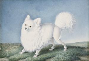 Nicolas II HUET - Drawing-Watercolor - Étude de Spitz, nain de Poméranie