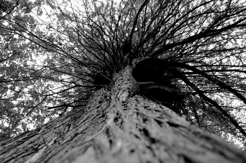 Camille EVEILLARD - Photography - La Spirale