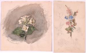 """Franz Xaver GRUBER - Zeichnung Aquarell - """"Two Flower Studies"""", 19th Century"""