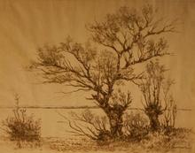 Eduard LAMMERT - Drawing-Watercolor - Weiden am Wasser