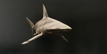 Stéphane JOANNES - Pintura - Requin