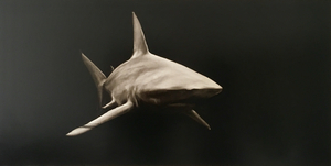 Stéphane JOANNES - Painting - Requin