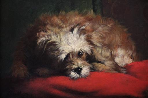 Edward QUITTON - Pintura - Portrait d'Un Petit Chien Portrait of a little dog