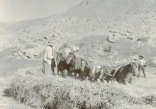 Martín CHAMBI - Fotografia - Cuzco (farmer with horses)