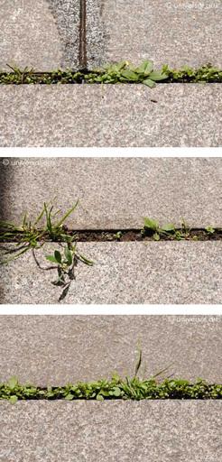 Mario STRACK - Photo - Lifeline 1-2-3 Triptychon limitierte Fotografien photographs