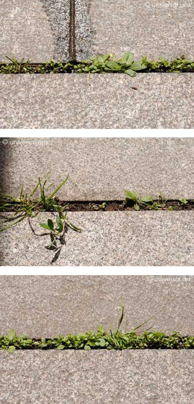 Mario STRACK - Photography - Lifeline 1-2-3 Triptychon limitierte Fotografien photographs