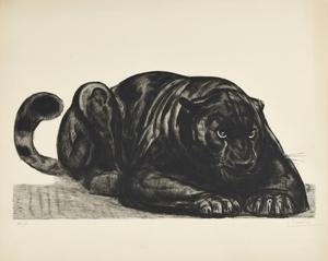 Paul JOUVE - Grabado - Panthère noire couchée de face