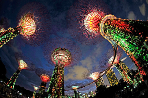 """Bruno PAGET - Photo - Singapore """"Gardens by the Bay"""" #2"""