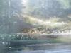 Serge CUCCA - Peinture - L'orée du bois vue de l'étang.