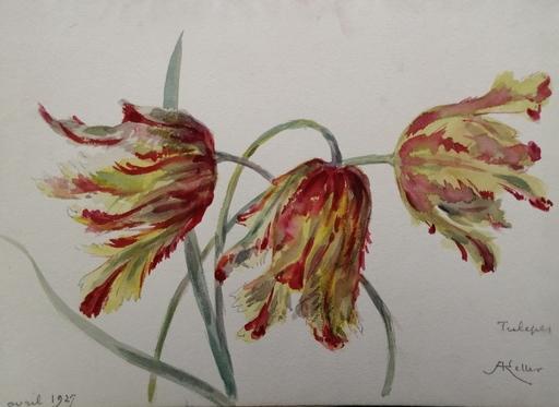 Alfred KELLER - Drawing-Watercolor - Tulipes