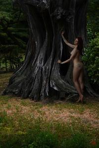 Michael K. YAMAOKA - Photography - Spirit of the Linden