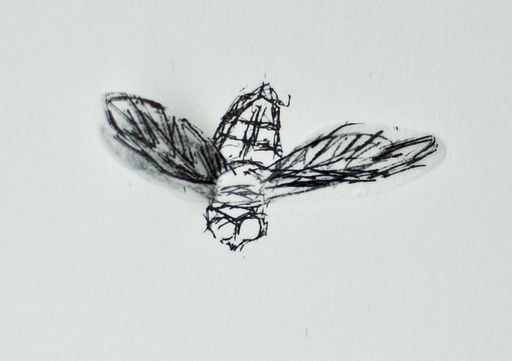 Kiki SMITH - Estampe-Multiple - Serie: squirrel, bee, moth, bird, fly, bat