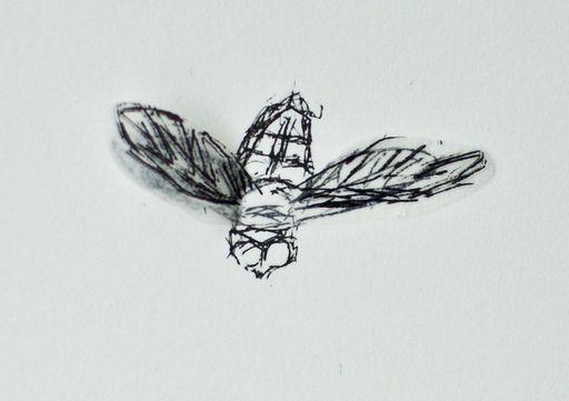 Kiki SMITH - Print-Multiple - Serie: squirrel, bee, moth, bird, fly, bat