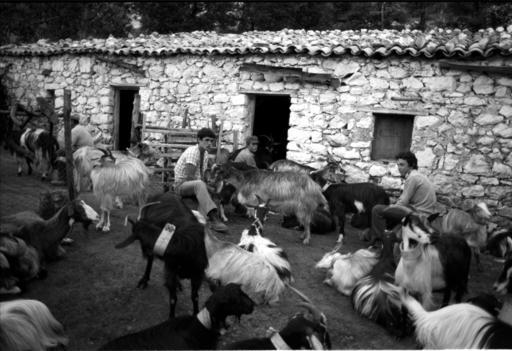 Giuseppe PERSIA - Photography - Pastori di capre.