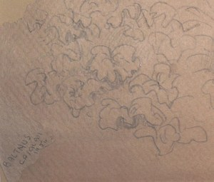 BALTHUS - Drawing-Watercolor - « Eve au jardin d'Eden »