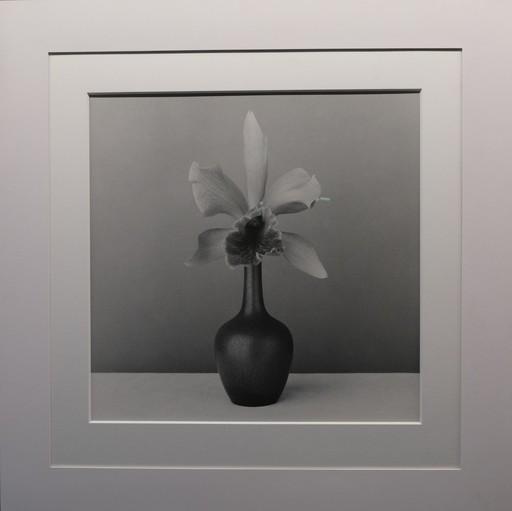 罗伯特·梅普勒索普 - 照片 - Orchid