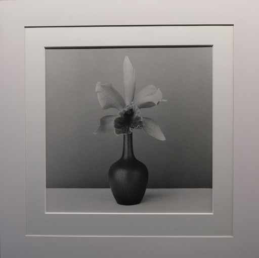 Robert MAPPLETHORPE - Fotografia - Orchid