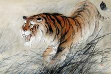 JIANG Mingxian - Dibujo Acuarela -  « The tiger »