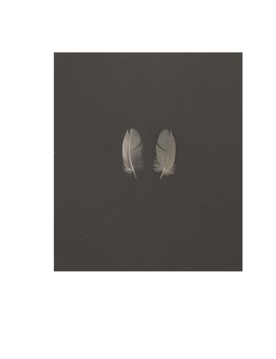 Kenneth JOSEPHSON - Fotografie - Feather 6#