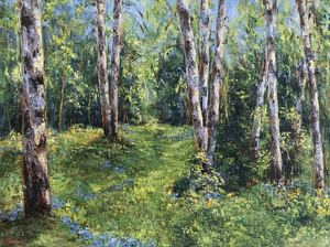 Diana MALIVANI - Pittura - Birch Trees in the Sunshine