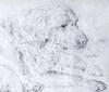 "Adam TOEPFFER - Dibujo Acuarela - ""Fidèle"" chien des Toepffer"