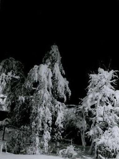 Emil MEERKÄMPER - Fotografie - Davoser Winternachtsmärchen