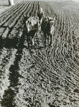 John VACHON - Photography - Residents of small town plowing field in back of his house