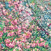 AKKADIA - Stampa-Multiplo - Les Jardins de Bagatelle 2016 I / Series Hanging Gardens
