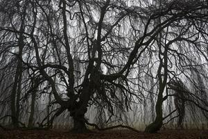 Paul BULTEEL - Photography - Winterreise N° 6    (Cat N° 6229)