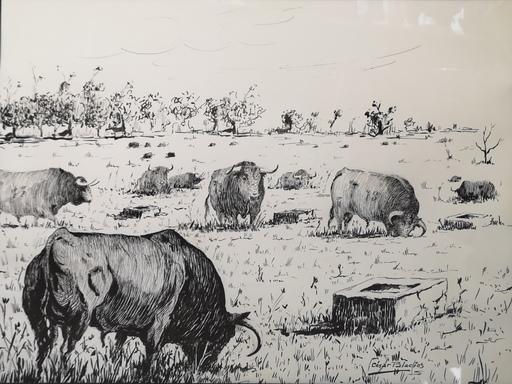 Cesar PALACIOS - Dibujo Acuarela - Toros