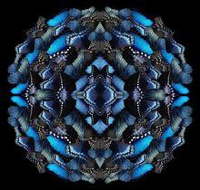 Sumit MEHNDIRATTA - Print-Multiple - Midnight Morphosis