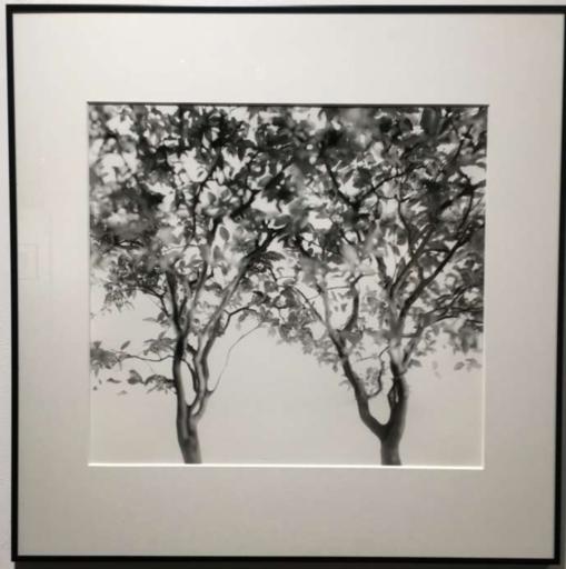 Valerie KNIGHT - Fotografia - Sans titre (série Litle Big Tree 'D')