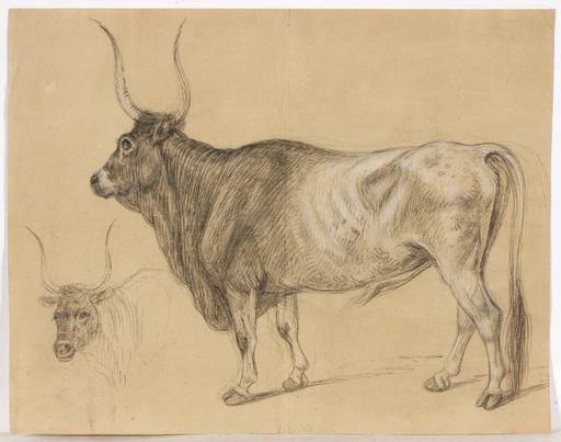 "Alexander Johann DALLINGER VON DALLING - 水彩作品 - ""Bullock"", large drawing, early 19th century"