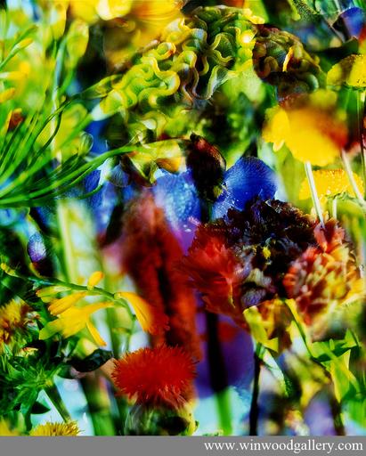 Marie-Jo LAFONTAINE - Fotografia - Paradise Lost II