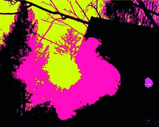 Sigrun NEUMANN - Print-Multiple - Sky flower