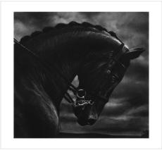 Robert LONGO - Grabado - Untitled (Bucephalus)