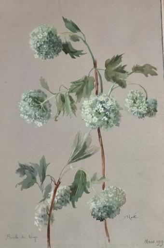 Alfred KELLER - Dibujo Acuarela - Boule de neige - Botanique