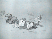Thomas COUTURE - Dibujo Acuarela - Study for Branch of Ivy (for Damocles) (Verso; Study for Dam