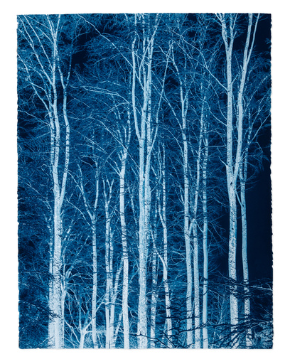 Gilles LORIN - Fotografia - Reaching to the Sky, Prussian Blue Study