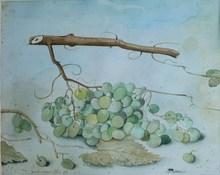 Dieter KRAEMER - Dibujo Acuarela - Le raisin et la mouche