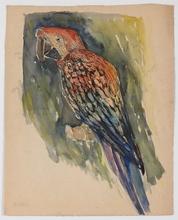 "Robert FUCHS - Drawing-Watercolor - ""Parrot"" by Robert Fuchs , Watercolor, ca 1920"