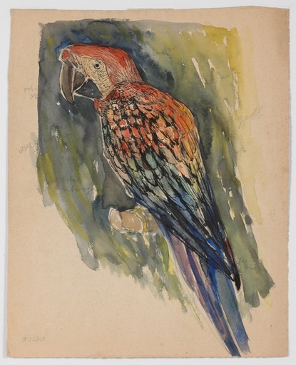 "Robert FUCHS - Drawing-Watercolor - ""Parrot"" by Robert Fuchs , Watercolor, ca 1920"