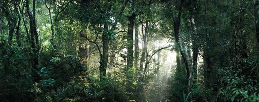 Cedric BREGNARD - Photo - Jungle I