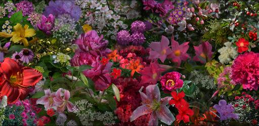 Michael K. YAMAOKA - Fotografia - The Persistence of Flowers, South Salem, NY