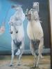 Michel CELLIER - Peinture - Le dressage en piste.