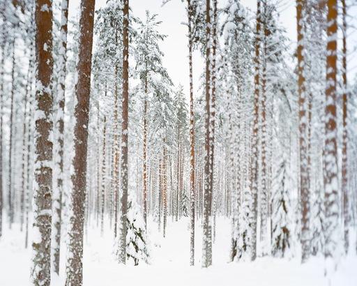 Charles XELOT - Fotografia - Flou Hiver / 4 saisons