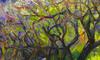 ZHENG Judy C. - Gemälde - Sunset