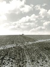 John VACHON - Photography - Collie dog follows farm boy on tractor, back and forth all d