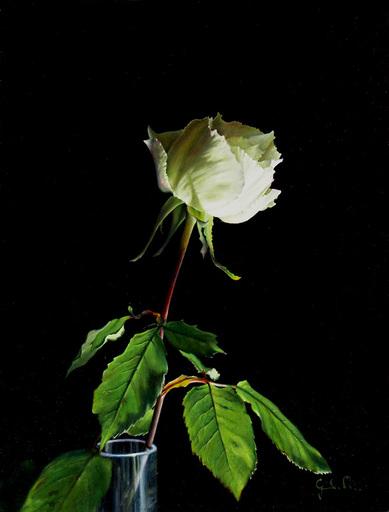 Riccardo GIRAUDO - Gemälde - Rosa bianca