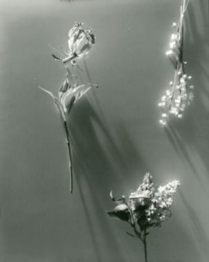 Herbert MATTER - Photography - Flowers